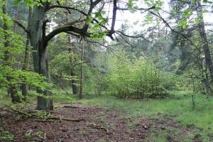 Abb. 2: Gelände der ehemaligen Schäferei (Bildquelle: Sebastian Grosser)